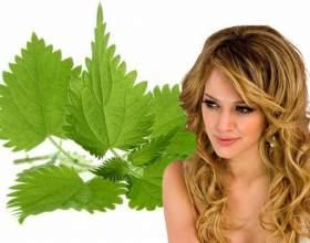Чем крапива полезна для волос? фото
