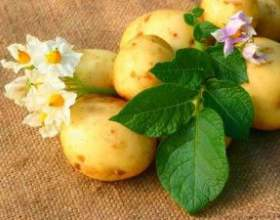 Маски для волос на основе картофеля-экономно и эффективно фото