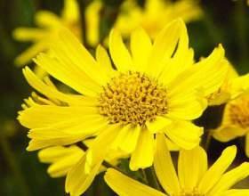Полезные свойства растений для волос фото
